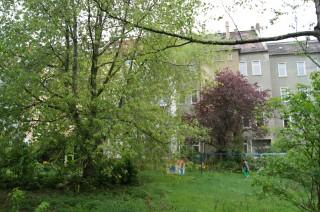 Grün statt Grau für Lindenau : Kartierprojekt ist angelaufen | Fast unberührte Natur in den unsanierten Blockbereichen / Foto: Dr. Birgit Glorius
