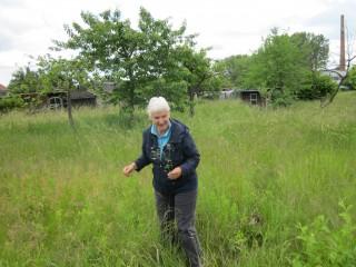 Bildinhalt: Kräuterführung über die Leutzscher Streuobstwiese | Dr. Sabine Hübert führt über die Streuobstwiese / Foto: Ökolöwe e. V.