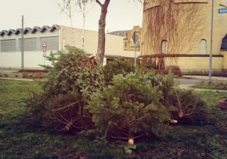 Ablagestellen für Weihnachtsbäume - Abholung zwischen 27.12.2015 und 31.01.2016 | Bild: Stadt Leipzig