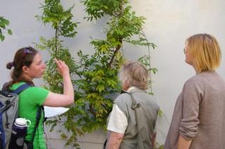 Rundgang zu grünen Fassaden im Leipziger Westen | Foto: Ökolöwe