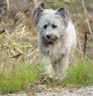 Bildinhalt: Achtung- Gefahr für Hunde  