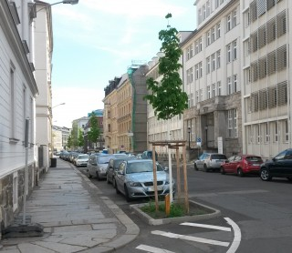 Bildinhalt: Neue Strassenbäume für Leutzsch | Baum nach Zwickauer Modell gepflanzt